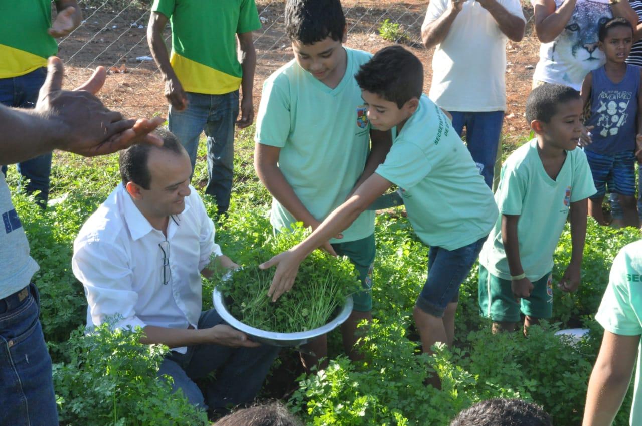 Prefeitura de Porto Nacional entrega primeira colheita da Horta Educativa para reforçar merenda das escolas e abrigos